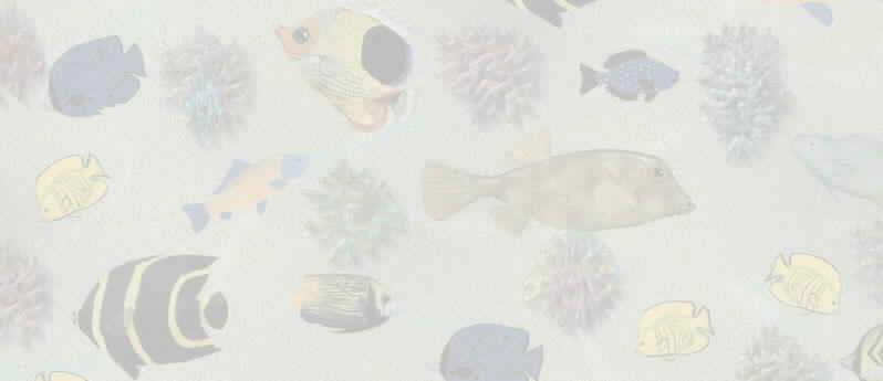 Background - Fish