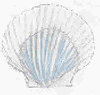 Background - Scallop